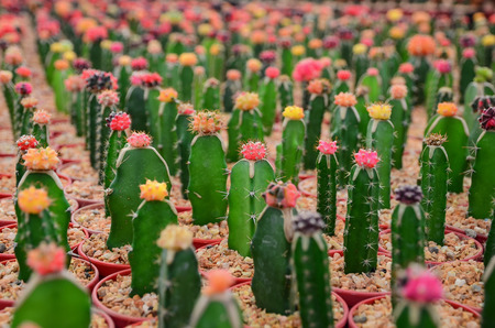cactus: Cactus farm selective focus