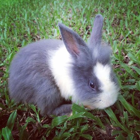 asian bunny: Baby rabbit Stock Photo