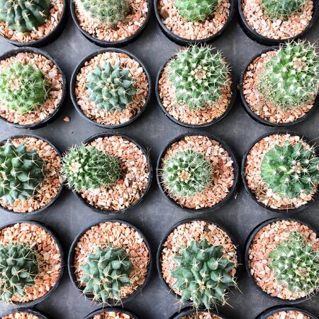 white: Cactus in the garden