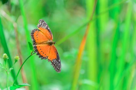 Closeup of orange butterfly
