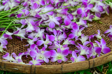 Purple orchid in the bamboo basket, Thai orchid