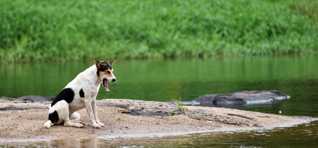 bored dog waiting owner on rock beside river Stock Photo