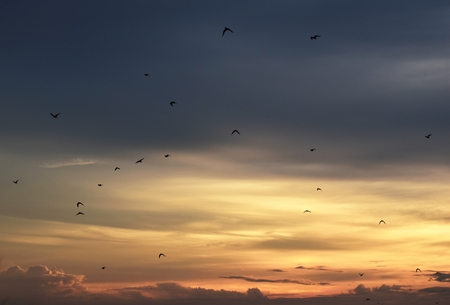 flock of birds in yellow sky before sunset in evening Banco de Imagens