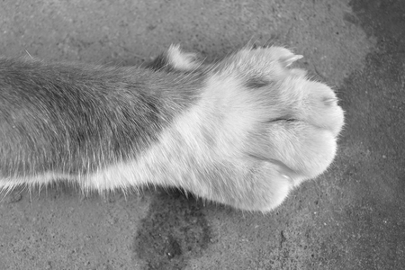 top view foot of cat foot black and white photography