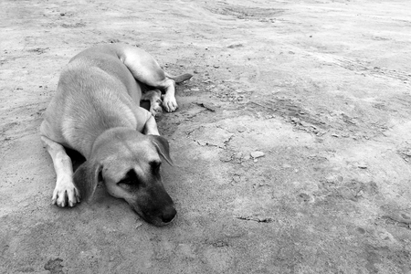 hungry stray dog wait someone give food on dirty ground in black and white photography