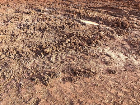 tire track of many vehicle on soil mud