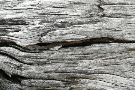 surface of old wood for background