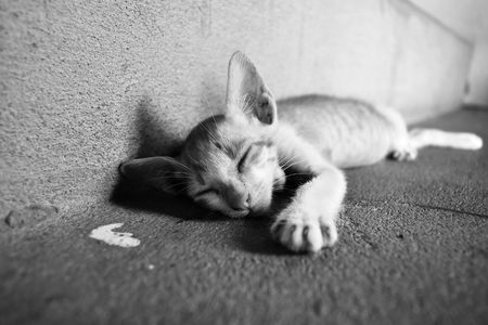 poor kitten sleep on dirty ground in black and white photography Zdjęcie Seryjne
