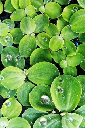 green plant and water drops