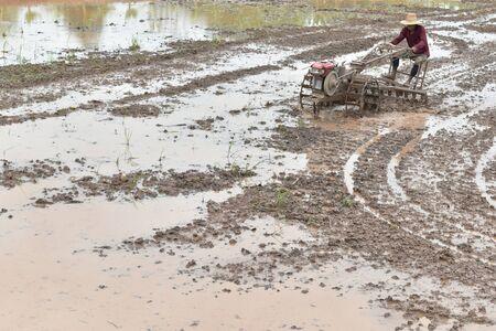 farmer plowing in rice field prepare plant rice under sunlight Stock Photo