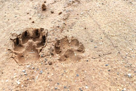 dog foot print on ground for background