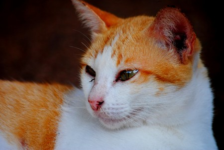 moggy: Pet cats are popular pets as lovely friends.