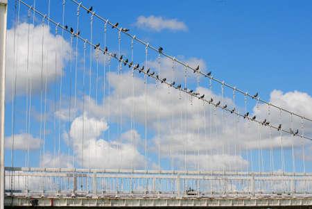 garden city: Puente blanco en una ciudad jard�n verde. Foto de archivo