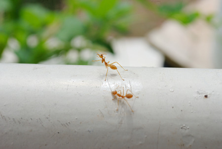 almost: Ants have colonised almost every landmass on Earth.