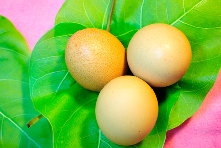 amphibians: Eggs are laid by female animals of many different species, including birds, reptiles, amphibians, and fish, and have been eaten by humans for thousands of years Stock Photo