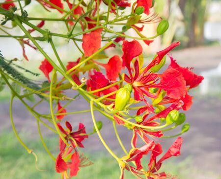 festal: red flowers.