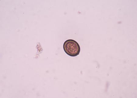 parasitic: a parasitic Stock Photo