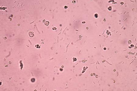 chromosomal: Bacteria