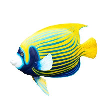 fish isolated: fish isolated on white background