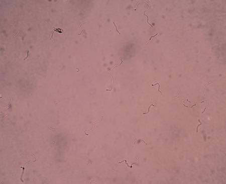 biomolecules: bacteria