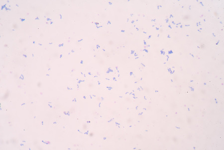 fimbriae: bacteria cell background medical concept.