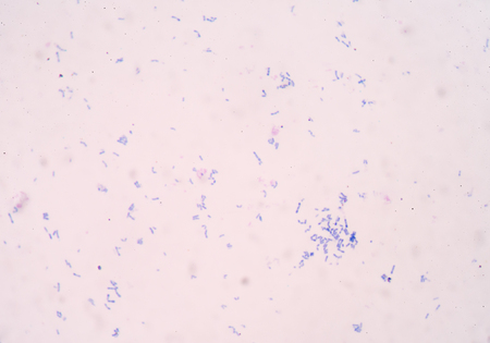 chromosomal: bacteria cell background medical concept.