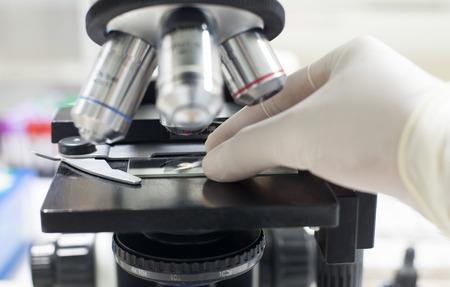 microscopio: Microscopio equipo.