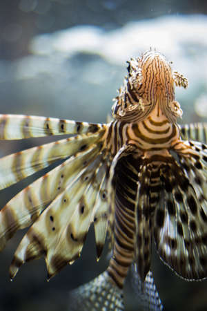 barbus: fish