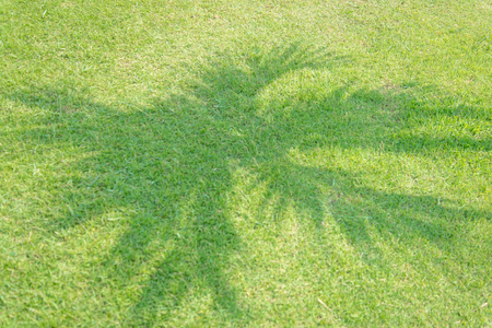 connectedness: Plam Tree shadow on  green grass Stock Photo