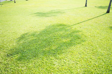 connectedness: Tree shadow on short green grass Stock Photo