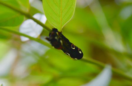 celula animal: oruga en la naturaleza. Foto de archivo