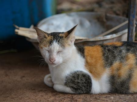 eyeing: Cat