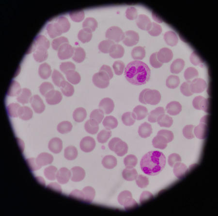 bloodcell: Red blood cells background.