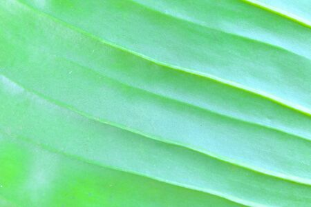 assort: Plants background.