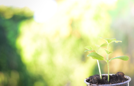Blurred Green Growing plants Stock Photo