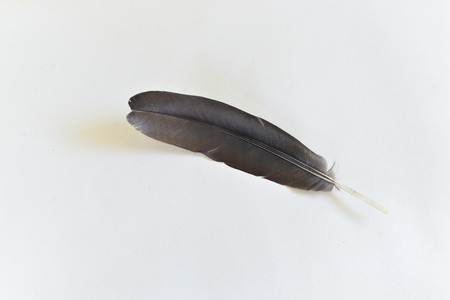 Chicken feathers on white background.