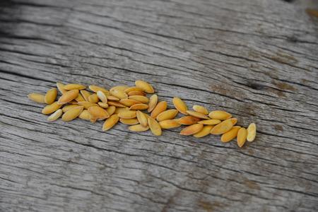 siembra: Semilla de Mellon en textura de madera.
