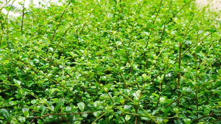 Groene blad natuur achtergrond.
