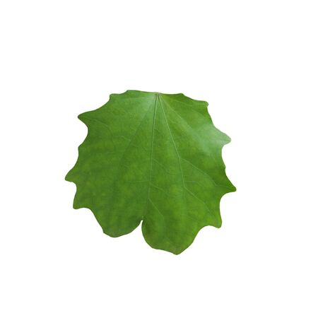 Green leaf on white background nature concept.
