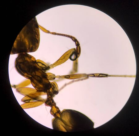 Close up macro structure of ant with microscope. 스톡 콘텐츠