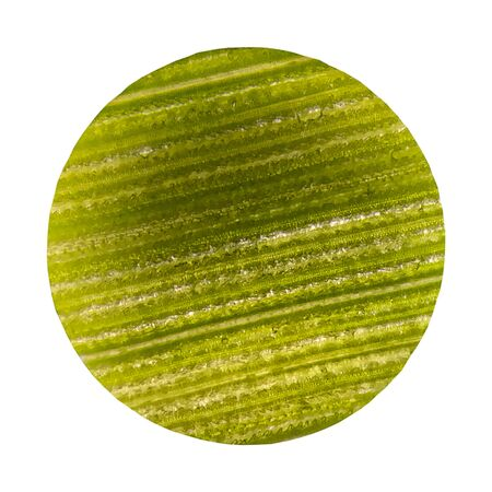 Cells on green leaf plants with microscope dicut on white background.