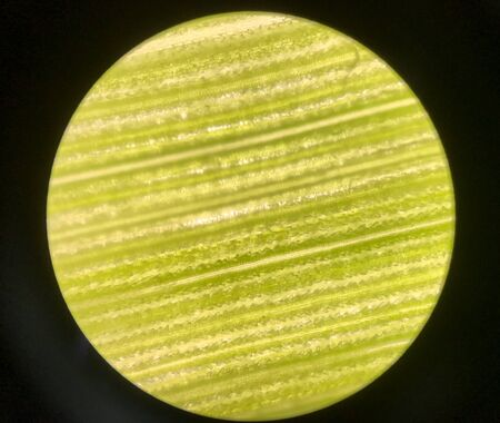 Cells on green leaf plants with microscope on black background. Stok Fotoğraf