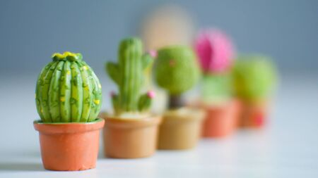 Little green cactus plants on blur background.