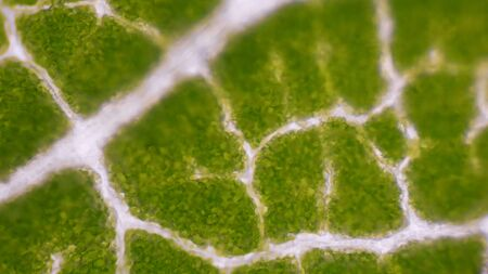 Close up Green leaf stoma cells science background.