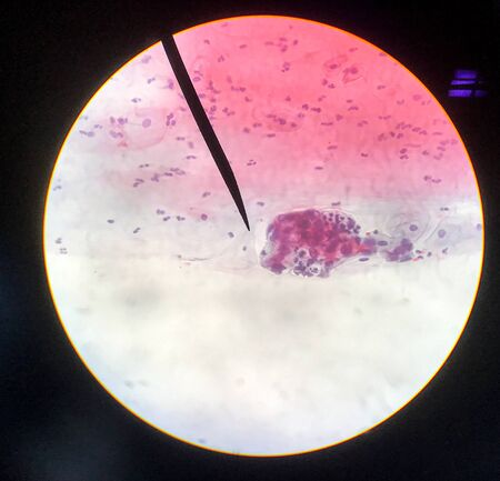 Cells in reproductive female cytology and histology concept medical science.