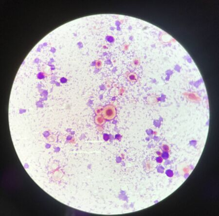 budding yeast cell structure finding with microscope in laboratory. Reklamní fotografie