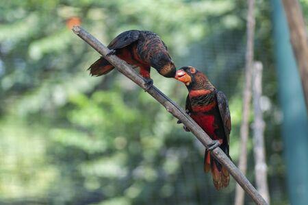 two parrot Фото со стока