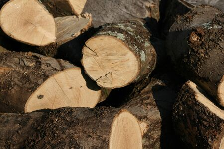 a picture of some cut down logs Stock Photo - 1413649