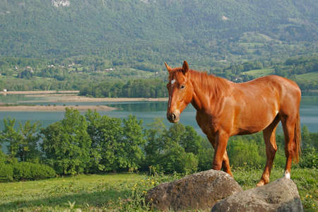 Horse in foreground with a lake in bottom