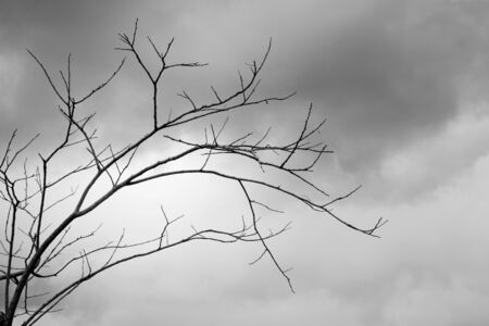 lonely tree: lonely tree without Leaves with sky background in black and white style Stock Photo